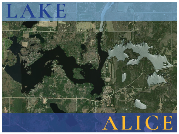 Lake Alice real estate
